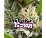 DR UNDERGROUND - Auto King Kong