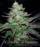 ! Candy Kush Express (Fast Version)