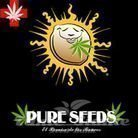 PURE SEEDS - Collector Auto