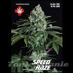 PURE SEEDS - Speed Haze