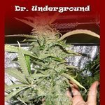 DR UNDERGROUND - Crystal M.E.T.H.