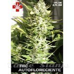PURE SEEDS - THC Autofloreciente