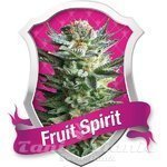 ROYAL QUEEN SEEDS - Fruit Spirit®