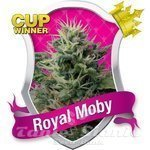 ROYAL QUEEN SEEDS - Royal Moby®
