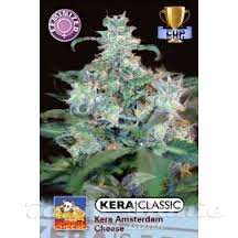KERA SEEDS - Amsterdam Cheese