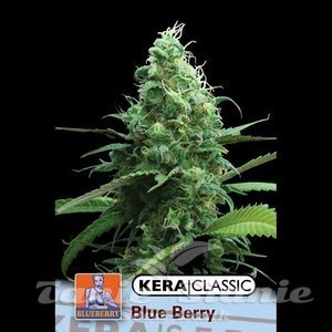 KERA SEEDS - Blue Berry White
