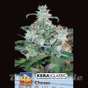 KERA SEEDS - Special Cheese
