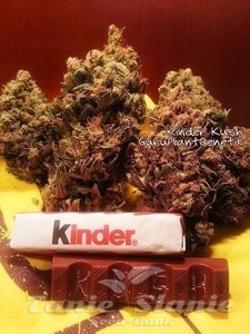 Biological Seeds - Kinder Kush