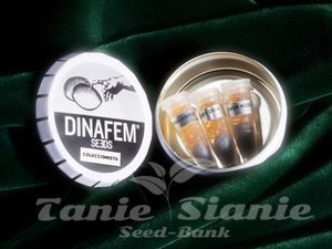 DINAFEM - Collectors Pack Nº 27