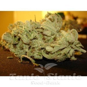 paradise_seeds_ice-cream_4.jpg